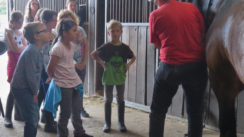 Praxis rund ums Pferd